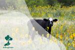 Apakah Mengurangi Konsumsi Daging Bermanfaat Bagi Bumi?