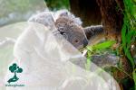 Mengenal Hewan Arboreal, Hewan-Hewan yang Hidup Di Atas Pohon