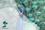 7 Jenis Burung Paling Berwarna dari Seluruh Dunia
