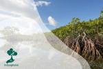Crustacea Pada Ekosistem Mangrove