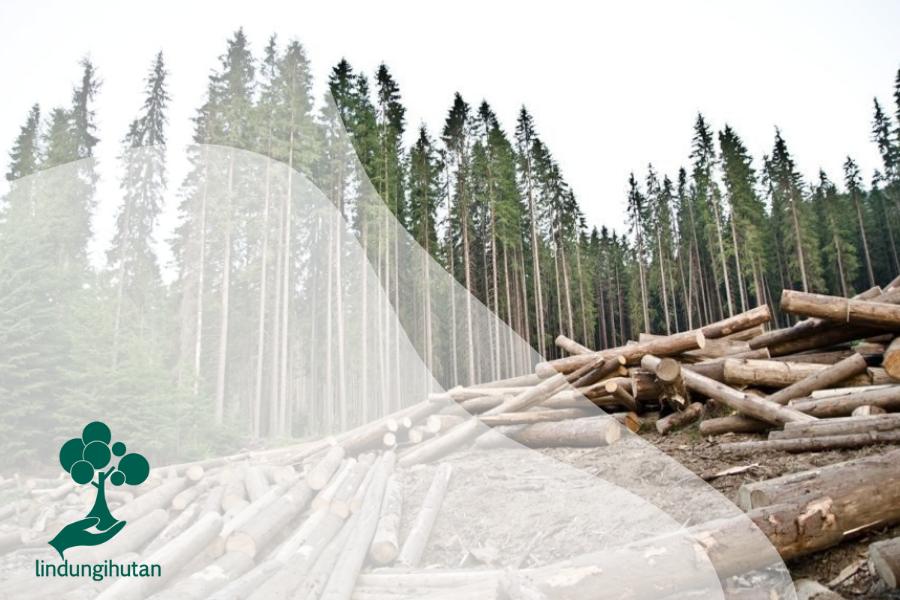 Timber Recycling: Daur Ulang Kayu untuk Menjaga Hutan