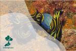 Nudibranch, Si Cantik yang Kanibal