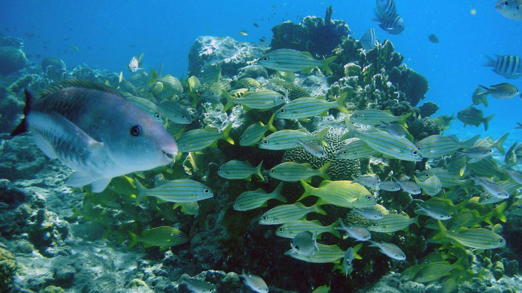 Produk Kecantikan Mengancam Ekosistem Maritim