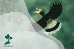 Mengenal Rangkong, Burung Penjaga Hutan tapi Marak Diburu