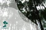 Mengenal Pohon Ampupu, Penghasil Kayu dari Timur