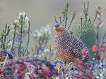 Taman Nasional Lorentz dan Ancaman Ekologis