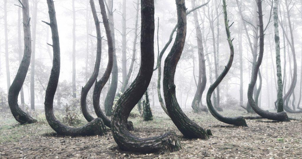 crooked forest krzywy las kilian schonberger poland fb – Wanaswara