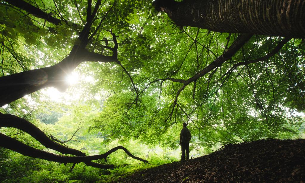 featured art heal forests – Wanaswara
