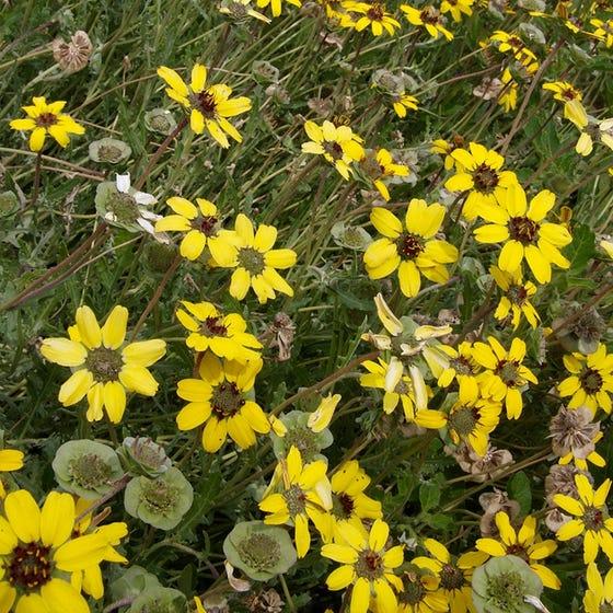 (gambar 4. Chocolate flower)