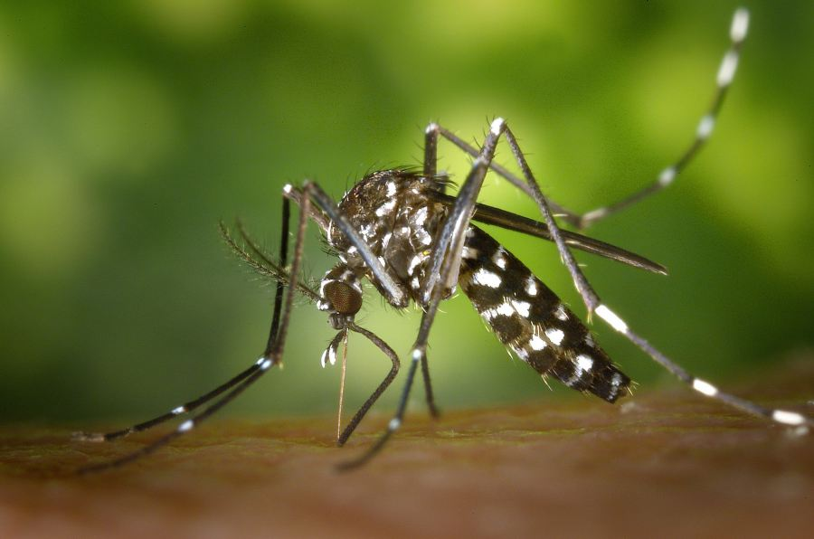 gejala demam berdarah 1 – Wanaswara