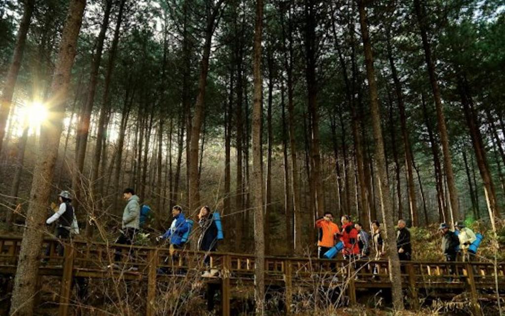 healing forest – Wanaswara