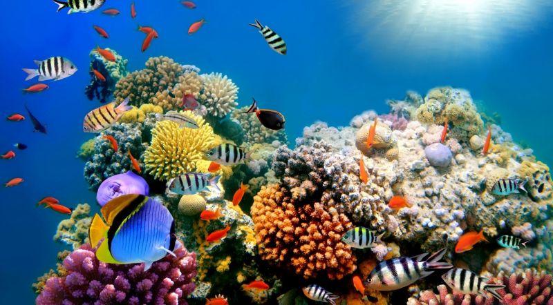 top travel 4 terumbu karang di bali dirusak menpar arief yahya ya allah b3BUq7PqIY – Wanaswara