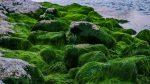Fotosintesis, Peranan dan Sejarah Awal Mulainya