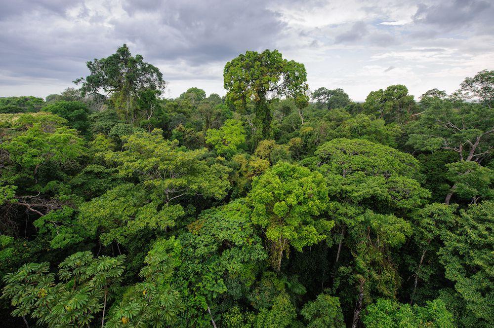 Gambar 1. Hutan Hujan Amazon akan Berubah menjadi Sabana jika Krisis Iklim Terus Terjadi