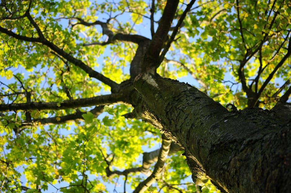 Gambar 1 Batang Pohon
