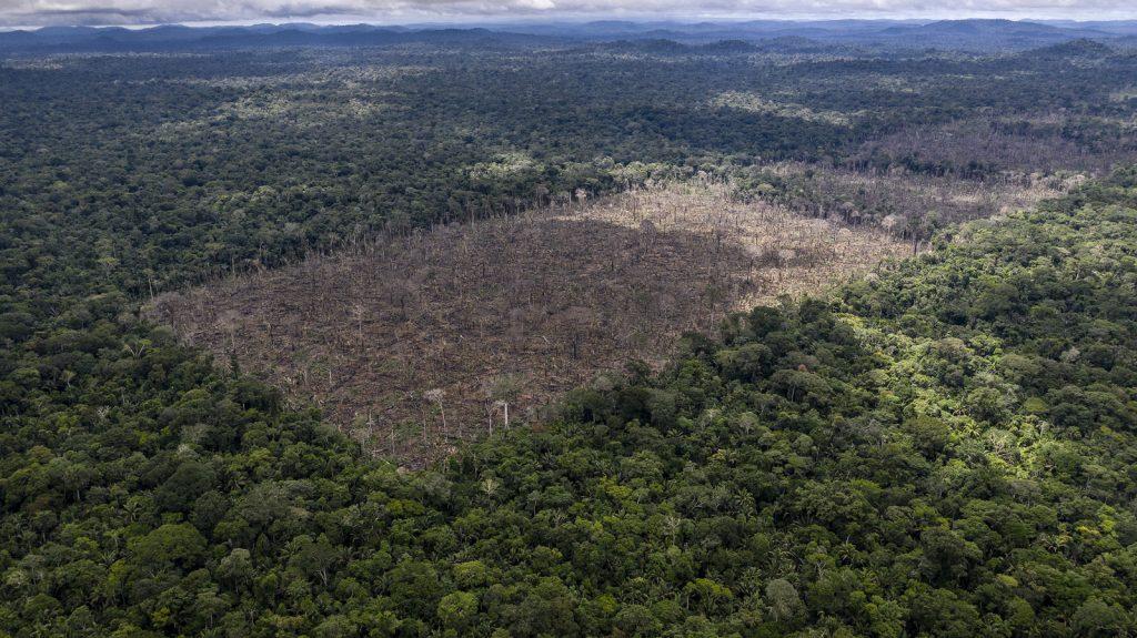 Gambar 1 Deforestasi Hutan