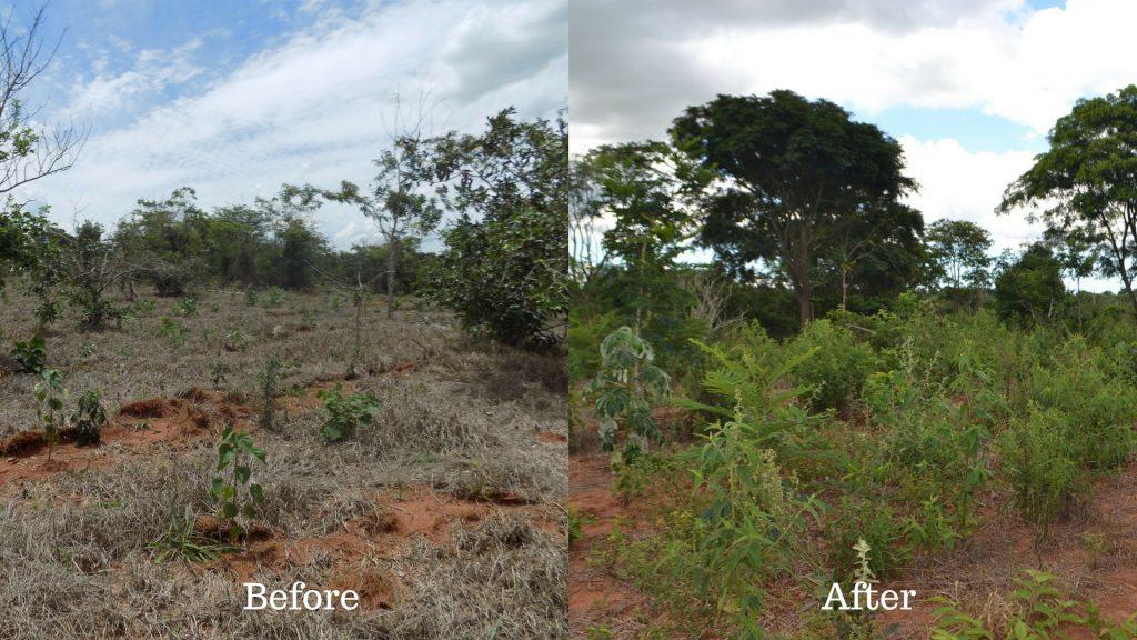 Gambar 2 Contoh Deforestasi Hutan Brazil