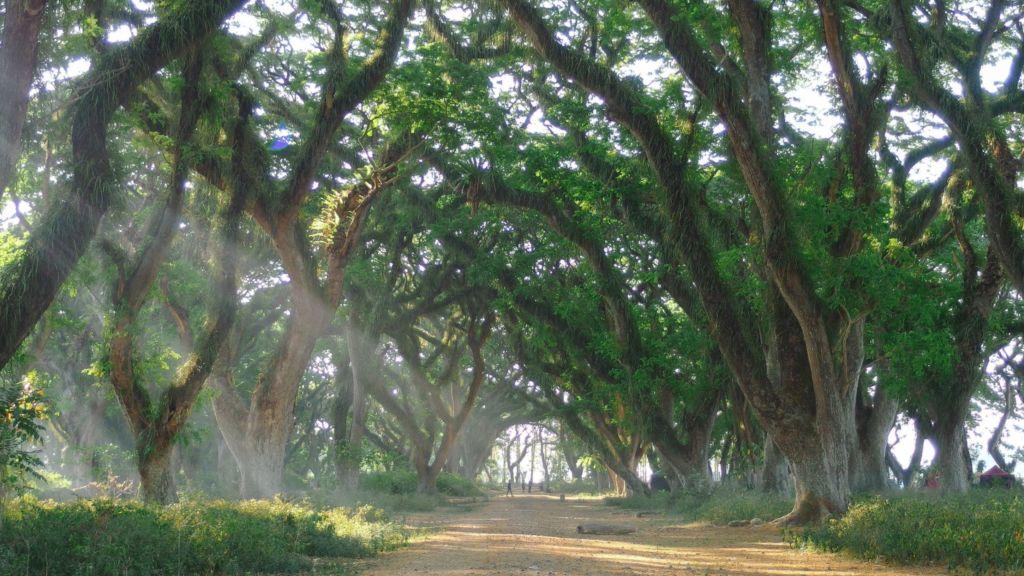 Gambar 1. Hutan De Djawatan