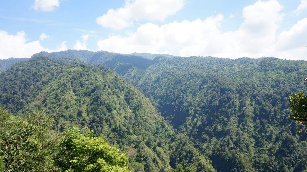 2.1.1 Hutan Hujan Tropis di Argopuro