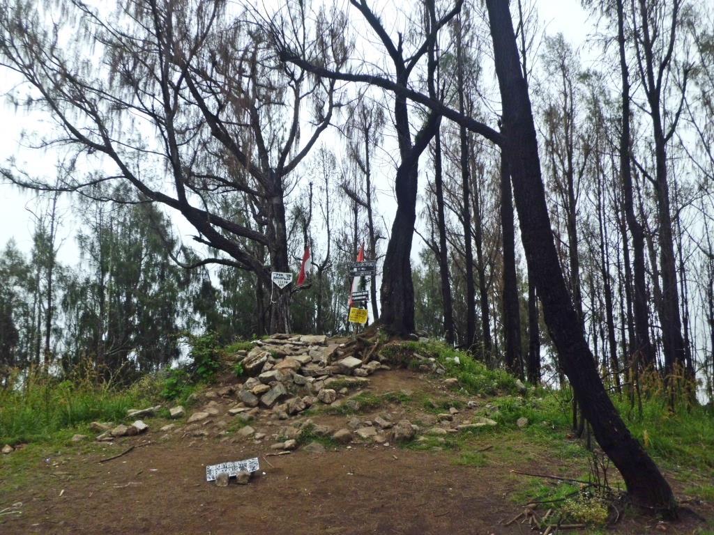 Gambar 2.2.1 Hutan Cemara