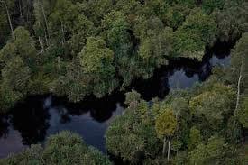 Gambar 1 Hutan Rawa Gambut