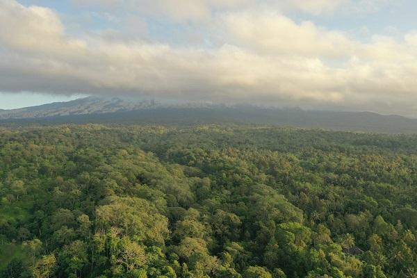 Gambar 2. Hutan Joben di Lombok Timur yang Menjadi Salah Satu Habitat Celepuk Rinjani