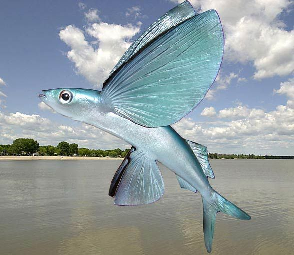 Ikan Torani – Wanaswara