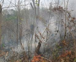 Gambar 2 Hutan yang akan Mengalami Suksesi