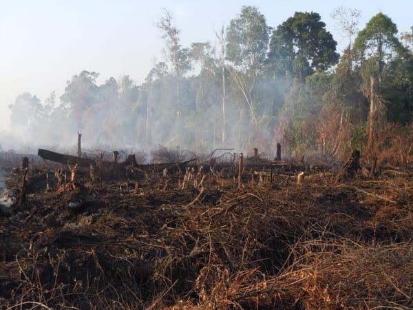 Gambar 3 Kebakaran pada Hutan Rawa Gambut