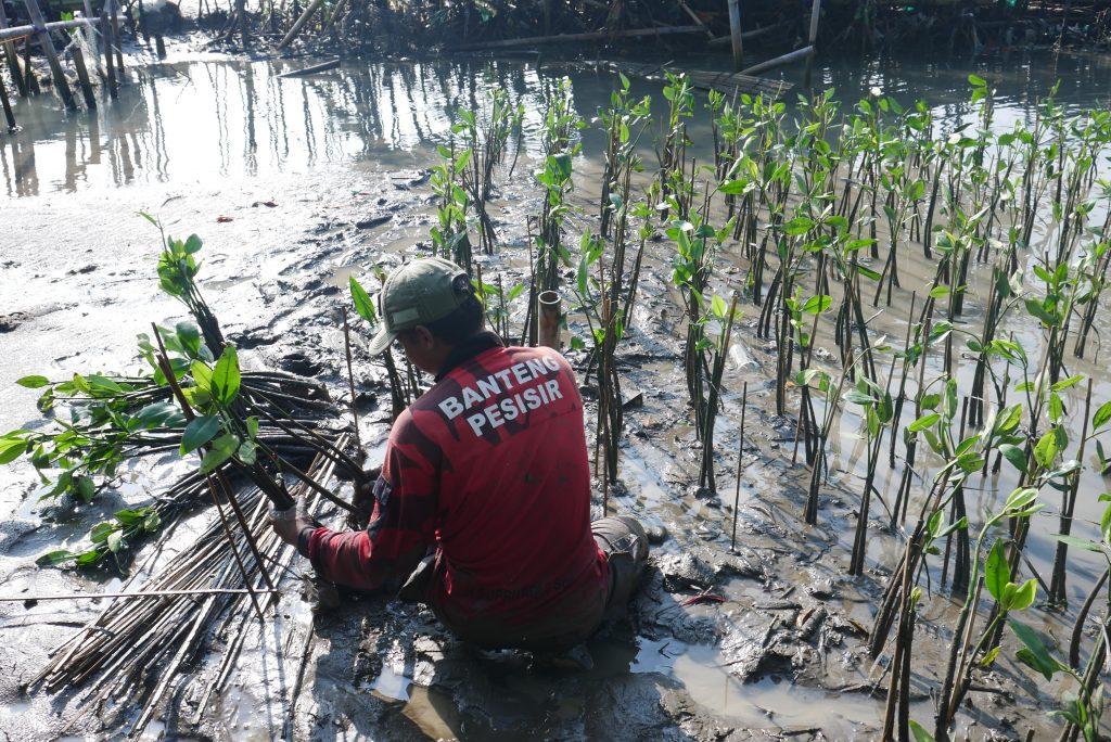 Kegiatan Penanaman Bibit Mangrove – Wanaswara