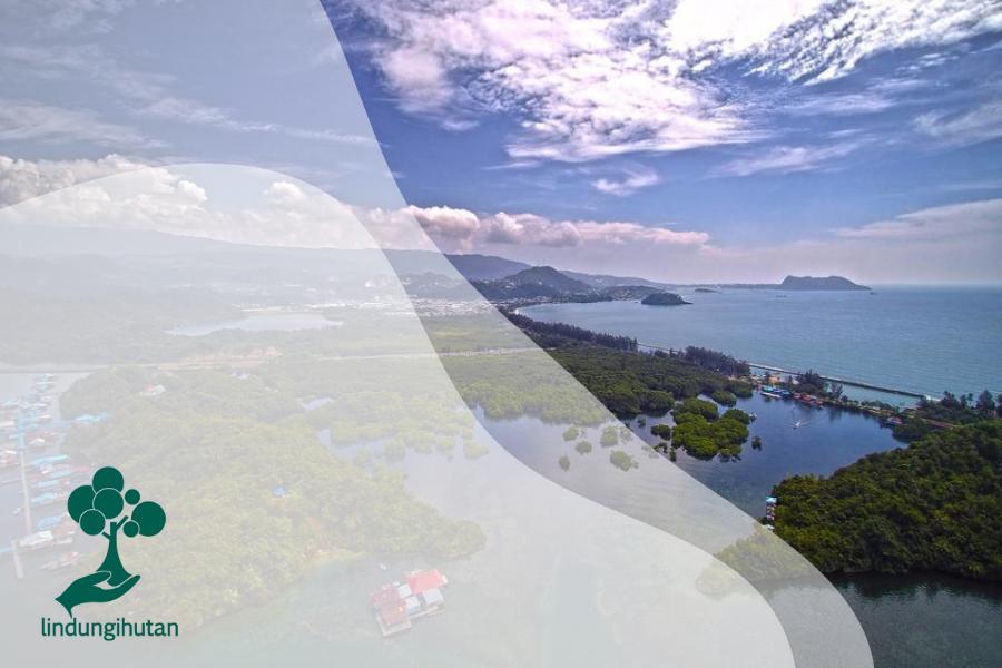 Nasib Hutan Perempuan di Papua, Tercemar Ulah Tangan Manusia