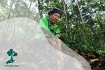 Apa itu Restorasi Hutan dan Bagaimana Kita Bisa Melakukannya dengan Benar?