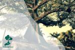 Meski Dikenal Mistis, Pohon Kepuh Ternyata Punya Potensi Biofuel lho!