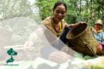 Antara SDG 9 dan Eksistensi Hutan: Bagaimana Menyeimbangkannya?
