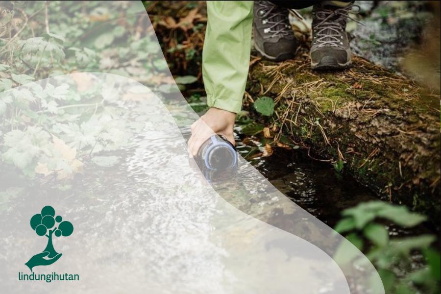 Tersesat di Hutan? Simak Tips Berikut untuk Bertahan Hidup!