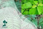 Lima Jenis Daun yang Bisa Digunakan untuk Pewarna Alami Tekstil