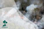 Ecoside, Kejahatan Lingkungan yang Sistematis dan Sangat Berbahaya