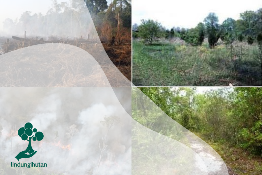 Suksesi pada Hutan Kerangas
