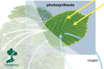 Setua Apa Fotosintesis?