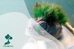 Mary River Turtle, Kura-kura Purbakala yang Terancam Punah
