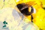 Kematian Koloni Lebah dan Krisis Iklim: Dunia Tanpa Serangga Penyerbuk