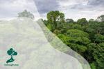 Krisis Iklim Mengancam Hutan Amazon: Pohon Bisa Hilang pada Tahun 2030