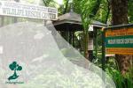 Nasib Wildlife Rescue Centre Jogja yang Terancam Tutup Karena Pandemi
