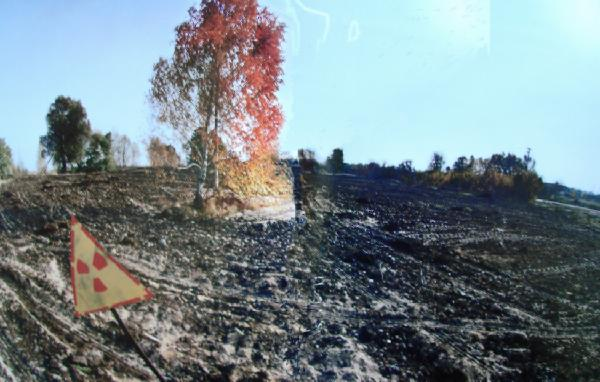 Gambar 3 Kawasan Hutan Dibersihkan dari Sisa Sampah Ranting dan Daun untuk Menghindari Terjadinya Kebakaran