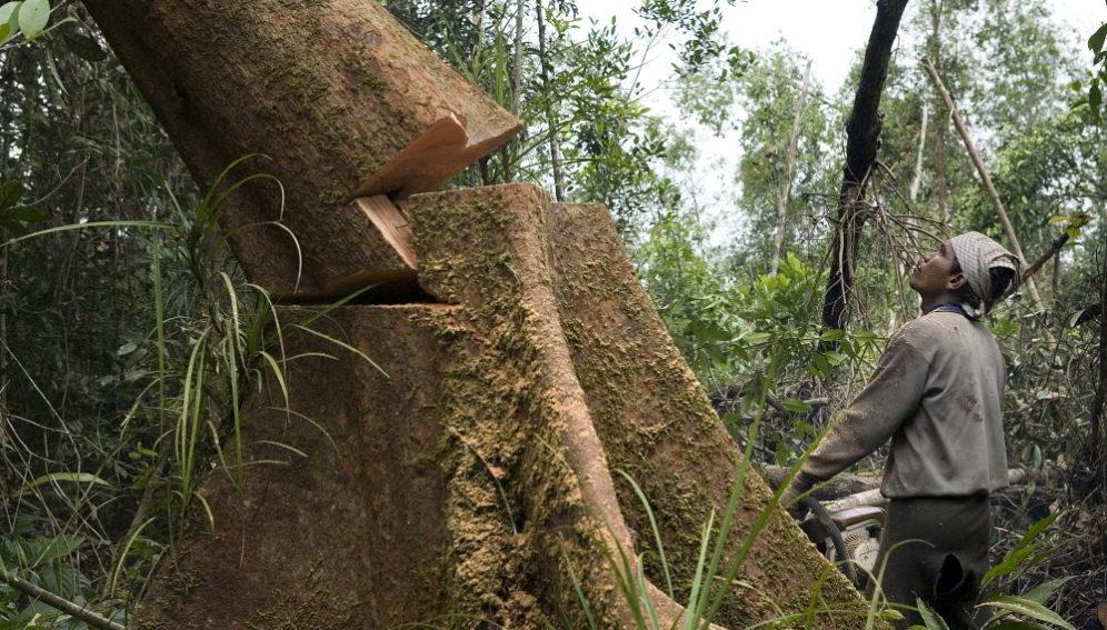 deforestation natalie behring panos 996x567 1 – Wanaswara