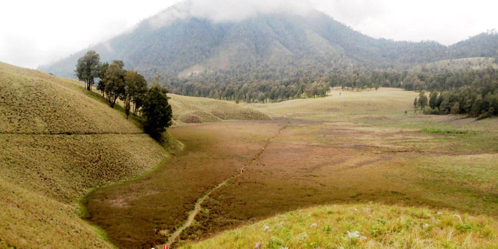 oro oro ombo kemarau – Wanaswara
