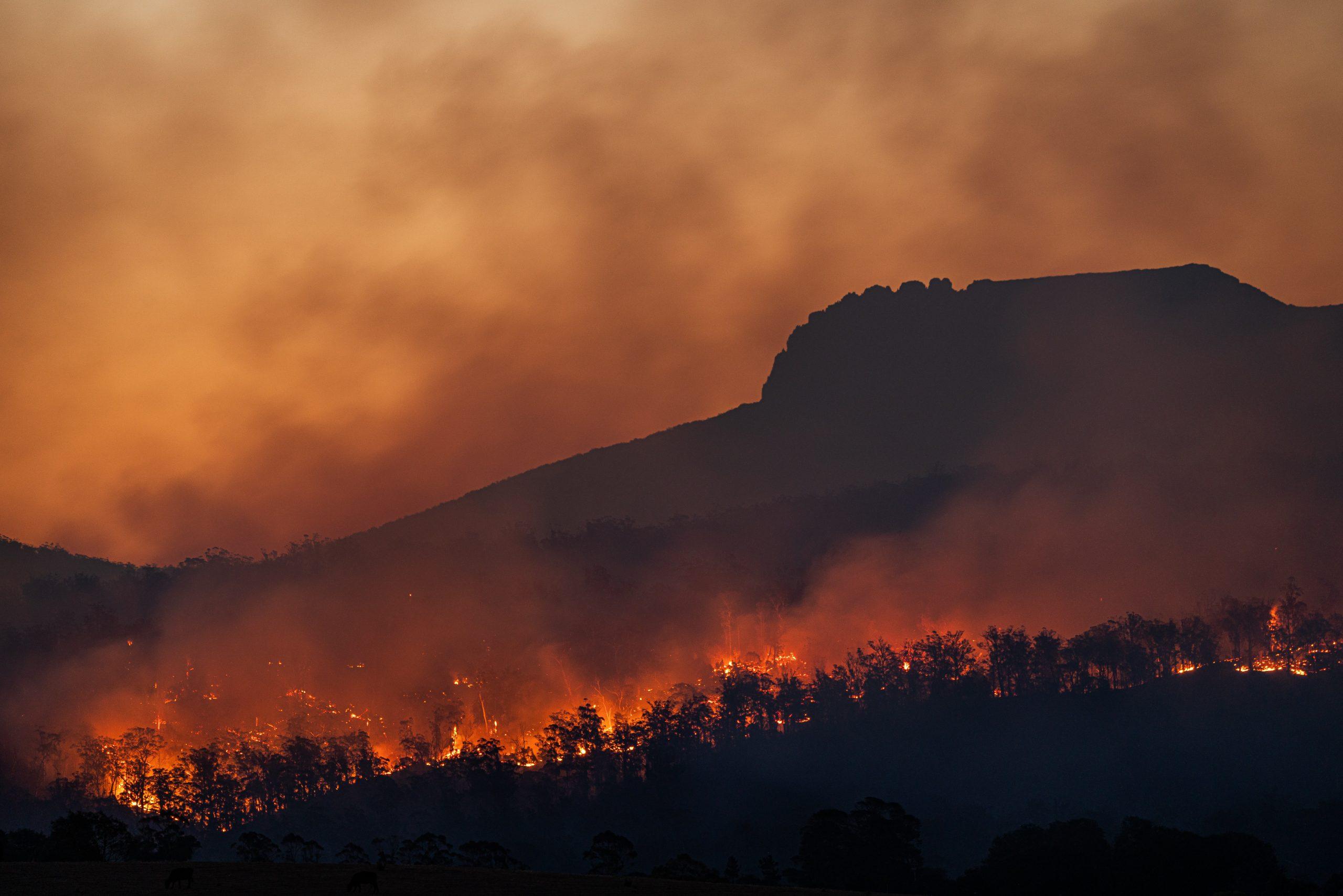 Gambar 1. Kebakaran Hutan