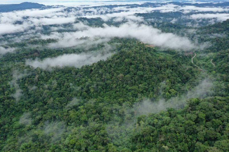Gambar 3 Penampakan Hutan dari Atas