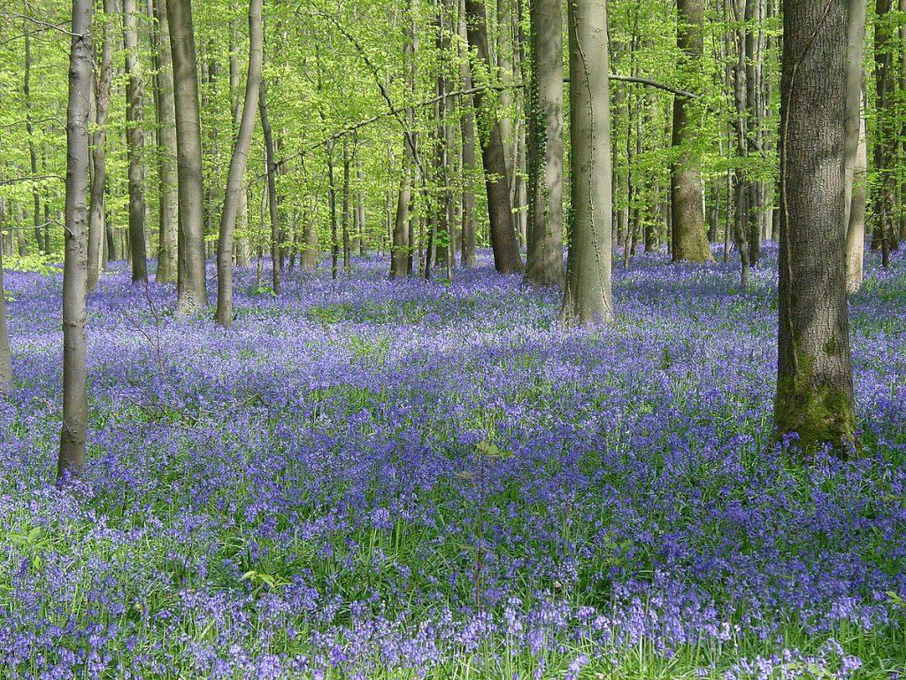 Gambar 2 Bunga Akan Bermekaran Saat Musim Semi