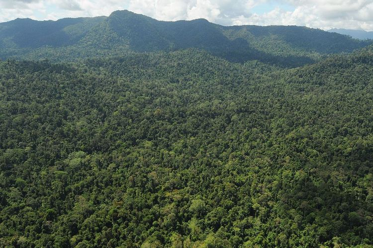 Gambar 1. Hutan Indonesia